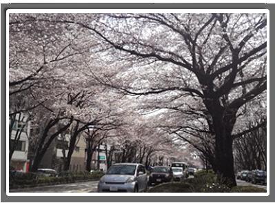 photo190401_nagasawa001.png